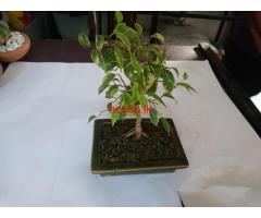 Rathnayaka Landscaping